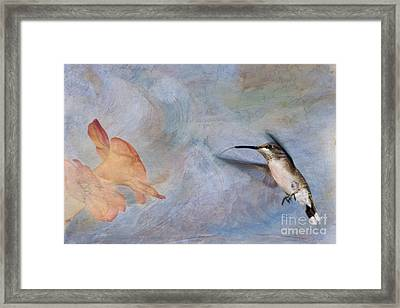 Ruby Throated Hummingbird 2 Framed Print by Betty LaRue