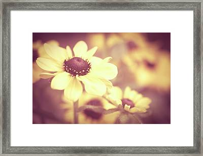 Rudbeckia Flowers Framed Print by Dhmig Photography