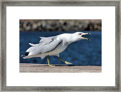 Ruffled Feathers Framed Print by Kristin Elmquist