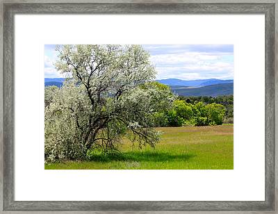 Russian Olive Framed Print by Karon Melillo DeVega