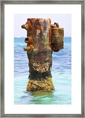 Rusted Dock Pier Of The Caribbean II Framed Print by David Letts