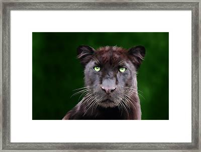 Saber Framed Print by Big Cat Rescue