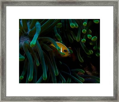 Safe At Home Framed Print by Brian Governale