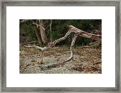 Sagamore Creek Shoreline Framed Print by Ron St Jean