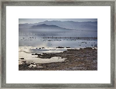 Salton Sea Birds Framed Print by Linda Dunn