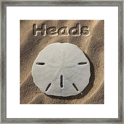 Sand Dollar Heads Framed Print by Mike McGlothlen