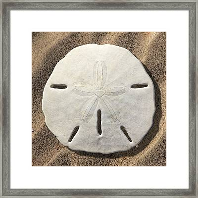 Sand Dollar Framed Print by Mike McGlothlen