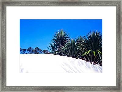 Sand Dune And Spanish Bayonet Framed Print by Thomas R Fletcher
