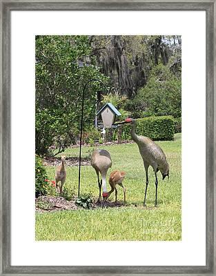 Sandhill Garden Party Framed Print by Carol Groenen