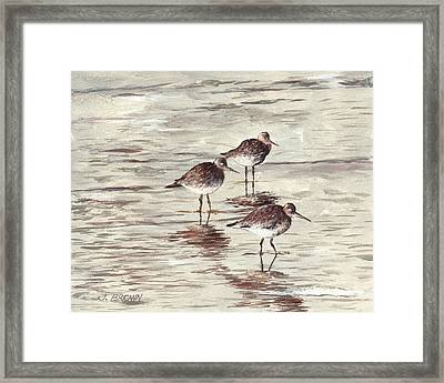 Sandpipers Framed Print by John Brown