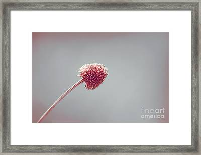 Sans Nom - S03b Framed Print by Variance Collections