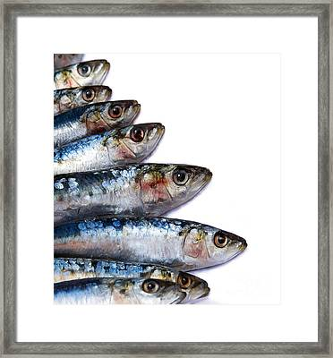 Sardines Framed Print by Jane Rix
