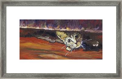 Scaredy Cat Framed Print by Sandy Tracey