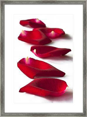 Scattered Rose Petals Framed Print by Zoe Ferrie