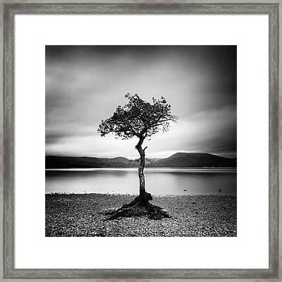Scotland Milarrochy Tree Framed Print by Nina Papiorek