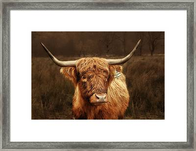 Scottish Moo Coo - Scottish Highland Cattle Framed Print by Christine Till
