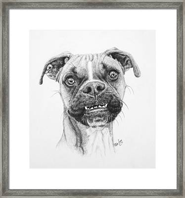 Scout Framed Print by Mike Ivey