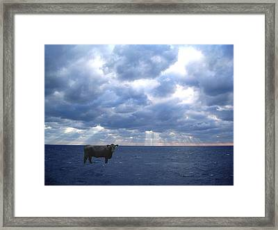 Sea Cow Framed Print by Sharon Mick