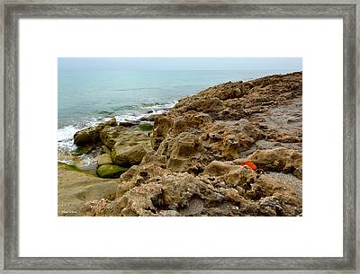 Sea Grape Framed Print by Michelle Wiarda