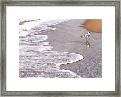 Sea Gull Reflection Framed Print by Cindy Lee Longhini