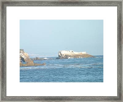 Sea Life Framed Print by Jamie Diamond