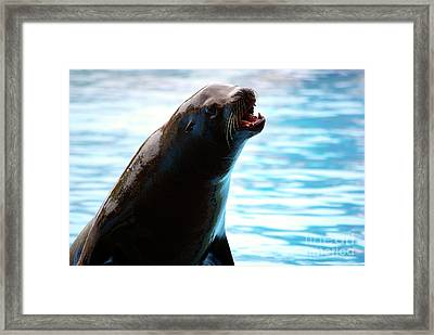 Sea-lion Framed Print by Carlos Caetano