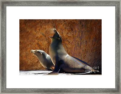 Sea Lions Framed Print by Carlos Caetano