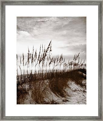 Sea Oats 1 Framed Print by Skip Nall