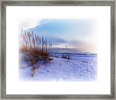 Sea Oats 3 Framed Print by Skip Nall