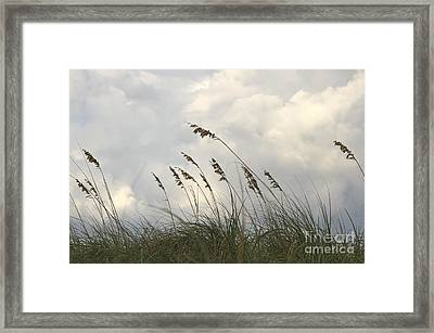 Sea Oats Framed Print by Blink Images