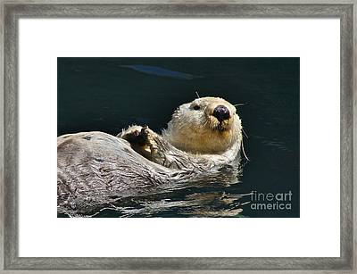 Sea Otter Framed Print by Sean Griffin