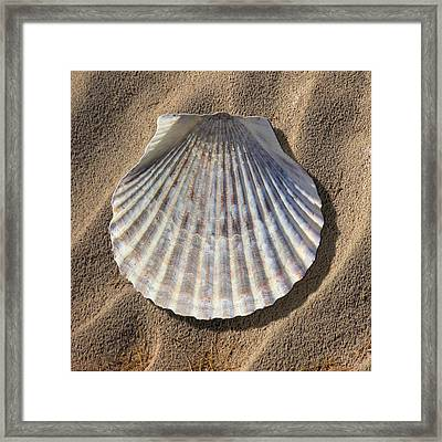 Sea Shell 2 Framed Print by Mike McGlothlen