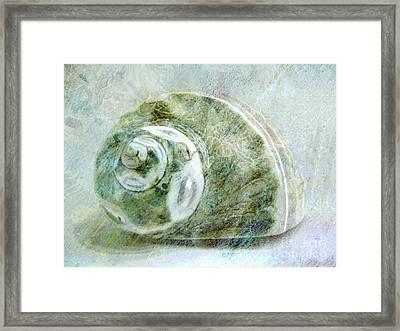 Sea Shell I Framed Print by Ann Powell