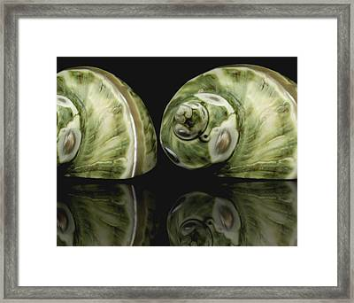 Sea Shells Photography Still Life Framed Print by Ann Powell