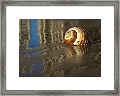 Sea Shells Framed Print by Renee Doyle