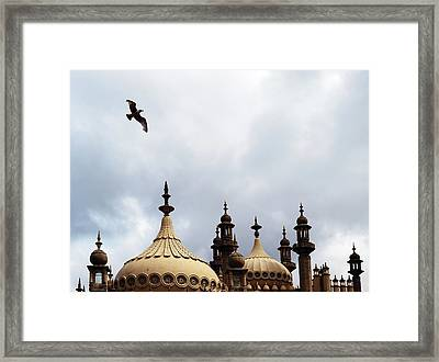 Seagull And Brightonpavillion Framed Print by Darren Lehane