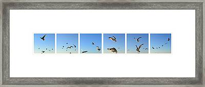Seagull Collage Framed Print by Michelle Calkins