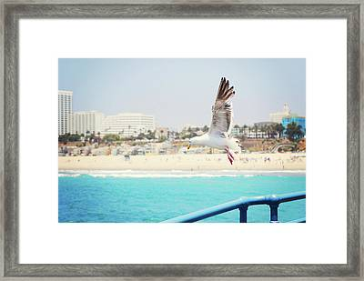 Seagull Flying Framed Print by Libertad Leal Photography