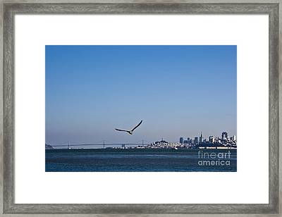 Seagull Flying Over San Francisco Bay Framed Print by David Buffington
