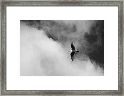 Seagull In The Clouds Framed Print by Twenty Two North Photography