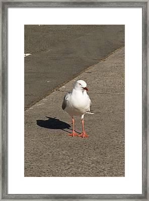 Seagull In The Summer Sun Framed Print by Ulrich Schade