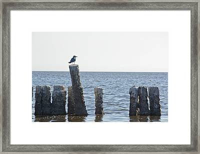 Seagull On A Post Framed Print by Linda Dunn