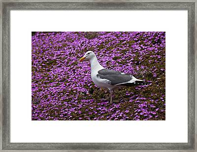 Seagull Standing Among Flowers Framed Print by Garry Gay