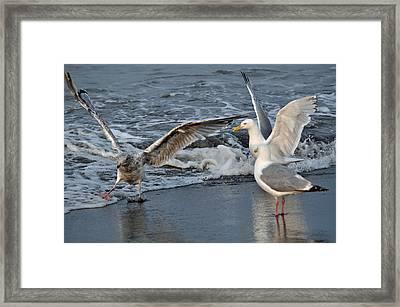 Seagull Treasures Framed Print by Debra  Miller