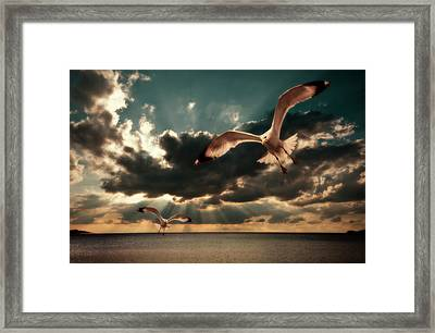 Seagulls In A Grunge Style Framed Print by Meirion Matthias
