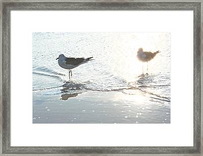 Seagulls In A Shimmer Framed Print by Olivia Novak