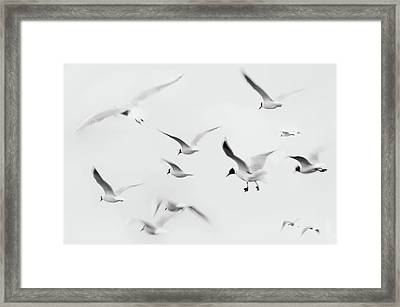 Seagulls Framed Print by K.Arran - photomuso