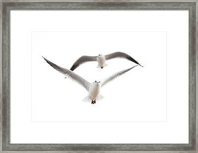 Seagulls Framed Print by Tom Gowanlock