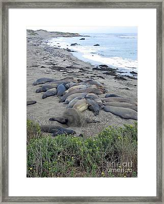Seal Spa. Sand Bath Framed Print by Ausra Paulauskaite