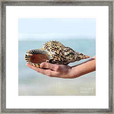 Seashell In Hand Framed Print by Elena Elisseeva